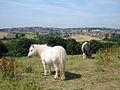 Ponies at Beulah Farm - geograph.org.uk - 208559.jpg