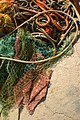 Port ropes.jpg