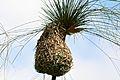 Pretoria Botanical Gardens-008.jpg