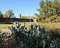 Prickly Pear at Mission San Jose (6645064935).jpg