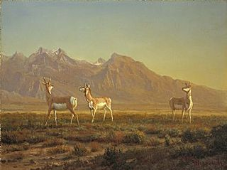 Prong-Horned Antelope with the Grand Tetons Beyond