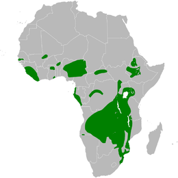 Pseudhirundo griseopyga distribution map.png