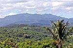 Puerto Rico El Yunque 6.jpg