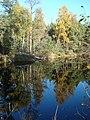 Purvs -Swamp - panoramio (1).jpg