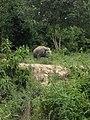 Pusat Latihan Gajah Riau 07.jpg