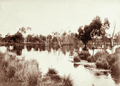 Queensland State Archives 5098 Murweh No 3 Bore overflow lagoon 1897.png