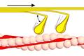 Querbrückenzyklus 2.png