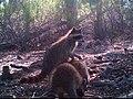Raccoons (6659381151).jpg