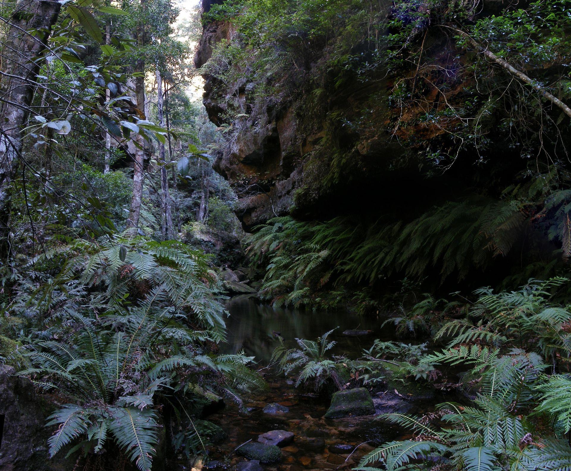 ブルー・マウンテンズ国立公園の画像 p1_22