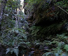 Rainforest,bluemountainsNSW.jpg