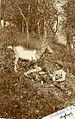 Razglednica Drežniške koze.jpg