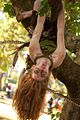 Redhead hanging out in a tree scaring passersby (8143686043).jpg