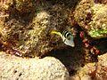 Reef2148 - Flickr - NOAA Photo Library.jpg