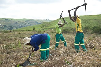 Restoration ecology - Forest restoration in action at the Buffelsdraai Landfill Site Community Reforestation Project in South Africa