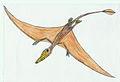 Rhamphorhynchus EF.jpg