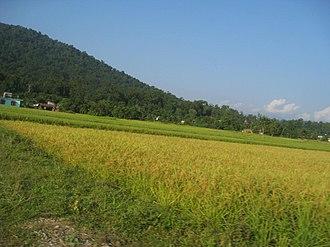 Gaindakot Municipality - Rice field in Gaindakot Town in Nawalparasi, Lumbini Nepal.