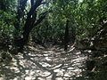 Riserva naturale orientata Bosco di Santo Pietro 08.jpg