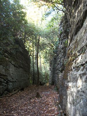 Coopers Rock State Forest -  View from inside the Rock City canyon