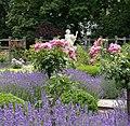 Rosarium Baden Doblhoffpark Gartenanlagen 15.jpg
