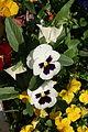 Rouen fleur place de la gare 6.JPG