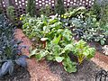 Row of Swiss Chard at Phipps Conservatory.jpeg