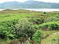 Rubh Armli, on Loch Eriboll - geograph.org.uk - 493150.jpg