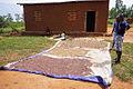 Rwanda beans.jpg