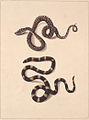 SLNSW 797161 f 21 Snakes No1 amp No2.jpg