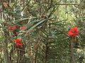 Samta - Hibiscus.JPG
