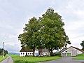 Sankt Aegidi - Naturdenkmal nd446 - Lindengruppe in Mittelbach.jpg