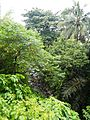 Sariaya,Quezonjf9733 02.JPG