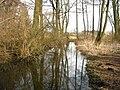 Schillerbach-24-03-2010 348.jpg