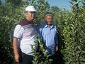 Scientist and farmer in the apple nursery (Namangan province).JPG