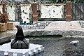Sea lion (509207619).jpg