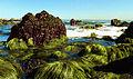 Seaweed Rocks2 wiki.jpg