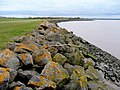 Severn shoreline - geograph.org.uk - 1201695.jpg