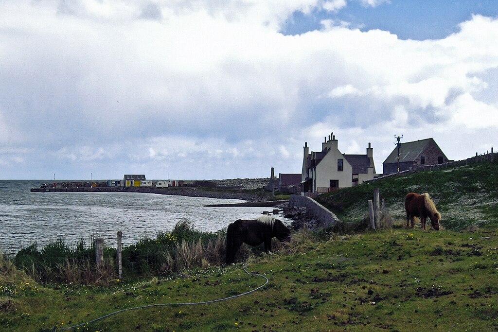 File:Shetland. Grutness Voe, genuine Shetland ponies ^ pier for ...