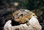 List Of Amphibians And Reptiles Of Montana Wikipedia