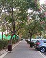Sidewalk in Herzliya, Israel.jpg