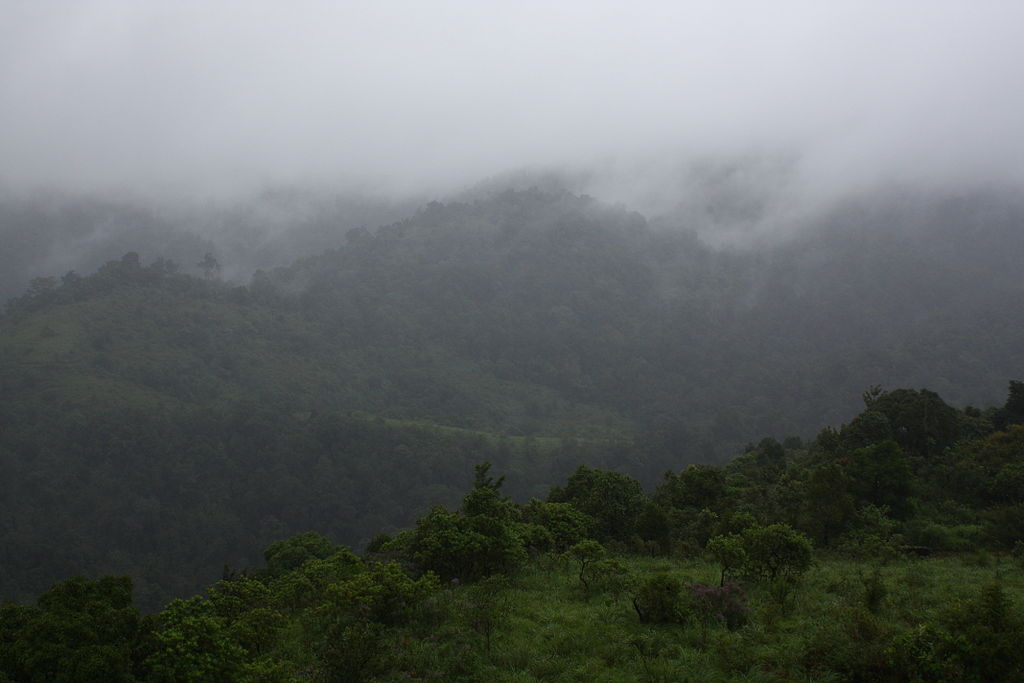 Silent Valley National Park In Kerala