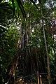 Singapore Botanic Gardens (4042377893).jpg