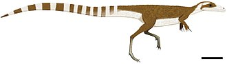 Compsognathidae - Artistic recreation of Sinosauropteryx with feathers