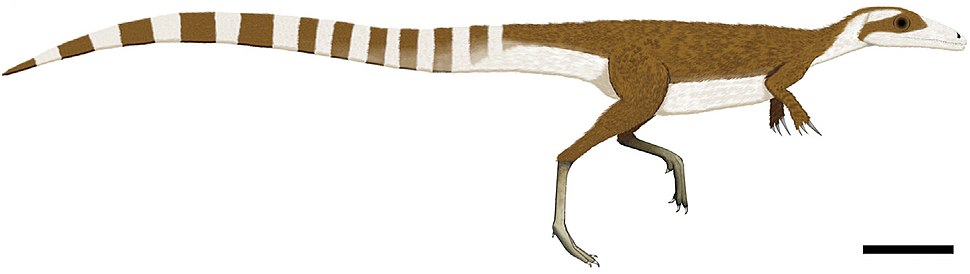 Sinosauropteryx color