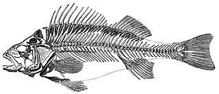 Marine vertebrate