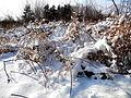 Snow14Slovakia8.JPG