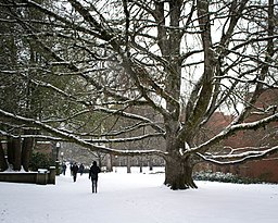 Snow Day (University of Oregon) 29