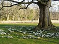 Snowdrops by the gate to Allan House - geograph.org.uk - 707157.jpg