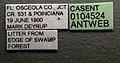 Solenopsis tennesseensis casent0104524 label 1.jpg