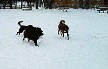 Dog Park Wikipedia