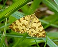 Speckled Yellow Moth Pseudopanthera macularia (34546989491).jpg